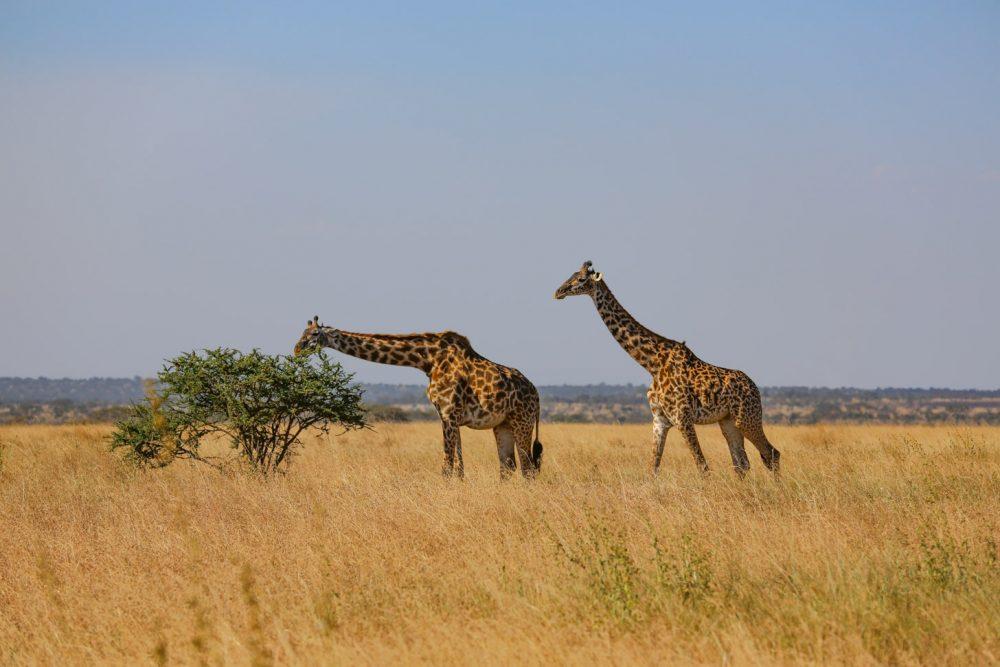 Het prachtige natuurpark Serengeti