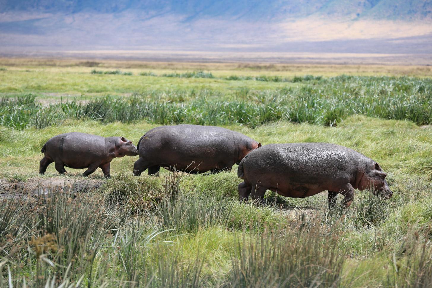 De natuur van Tanzania