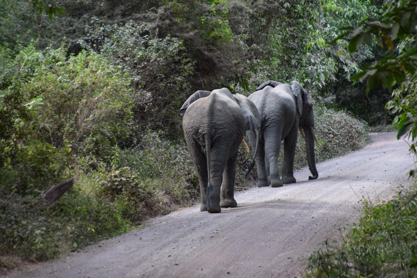 Te voet in Tanzania